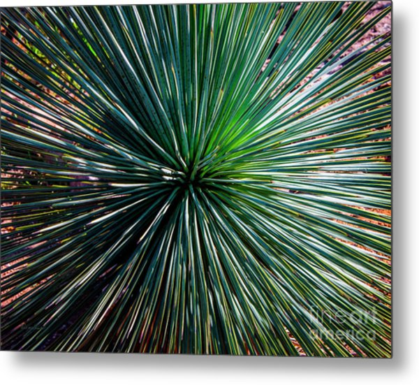 Abstract Nature Desert Cactus Photo 207 Blue Green Metal Print