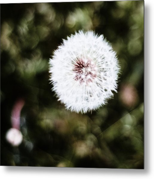 Abstract Seedhead - April 2014 Metal Print