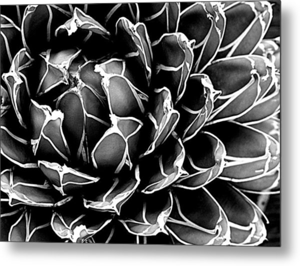 Abstract Succulent Metal Print