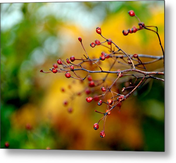 Abstract Tree Branch Metal Print by JoAnn Lense