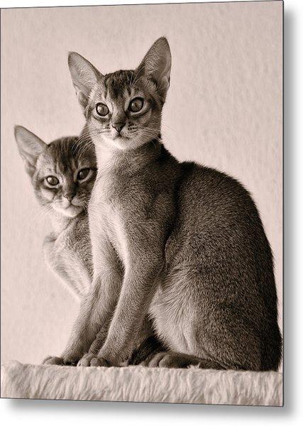 Abyssinian Kittens Metal Print