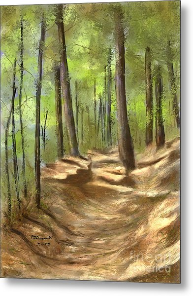 Adirondack Hiking Trails Metal Print