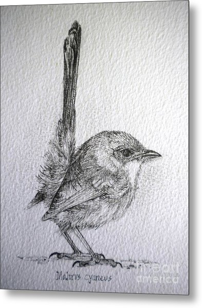 Adolescent Blue Wren Metal Print