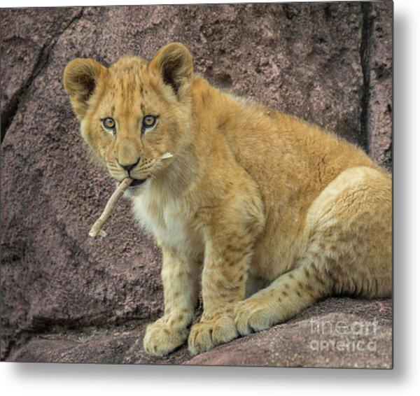 Adorable Lion Cub Metal Print