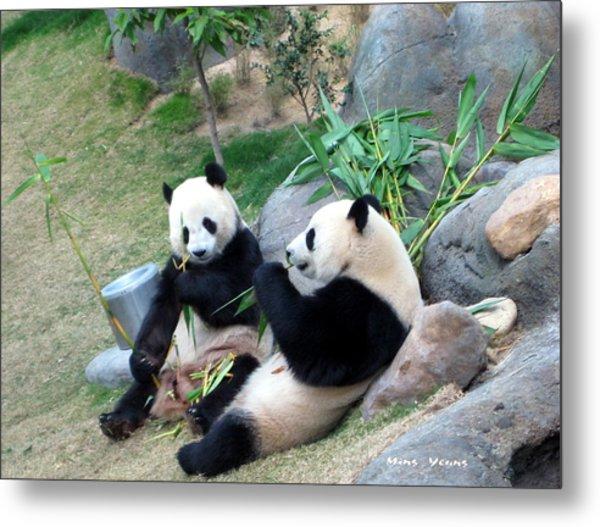 Adorable Pandas Metal Print by Ming Yeung