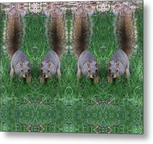 Advancing Army Of Squirrels Metal Print