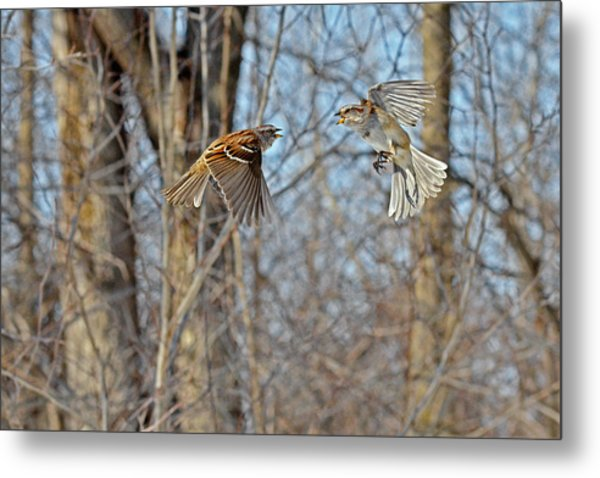 Aerial Battle Of The Forest Metal Print
