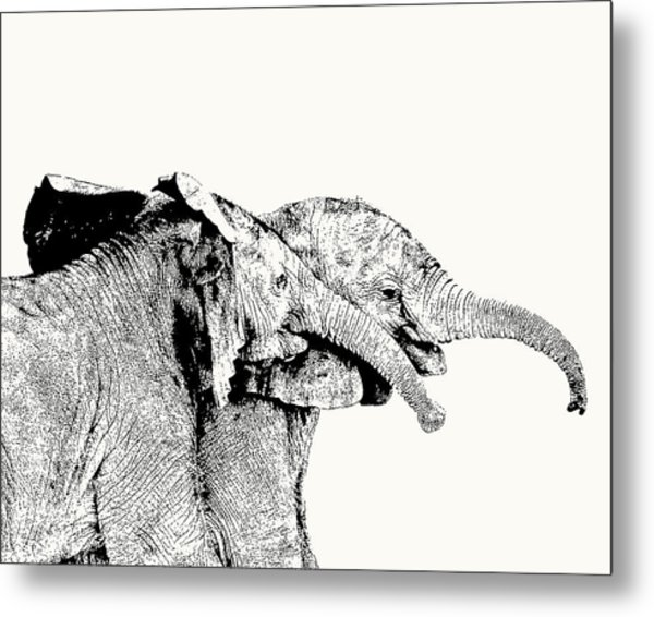 Affectionate Young Elephant Pair Metal Print