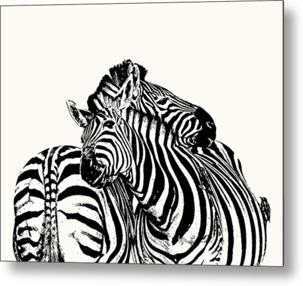Affectionate Zebra Pair Metal Print