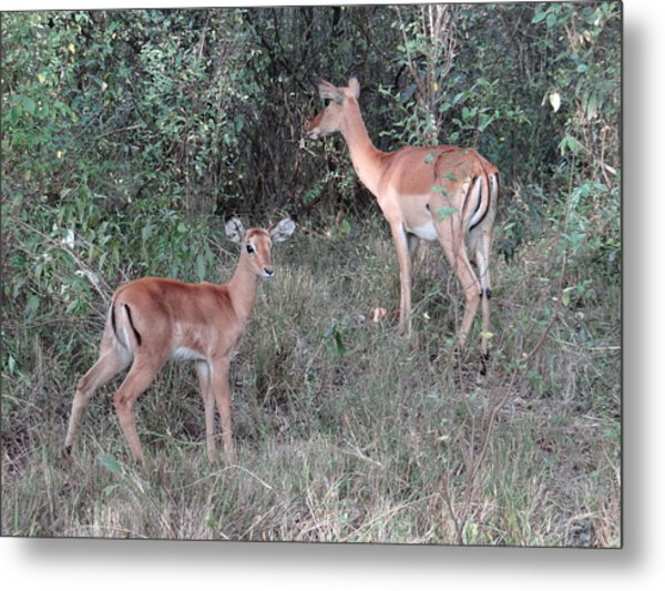 Africa - Animals In The Wild 2 Metal Print