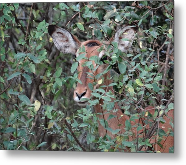 Africa - Animals In The Wild 4 Metal Print