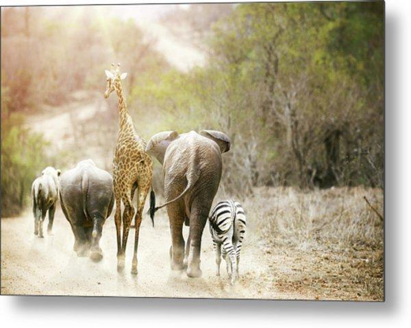 Africa Safari Animals Walking Down Path Metal Print