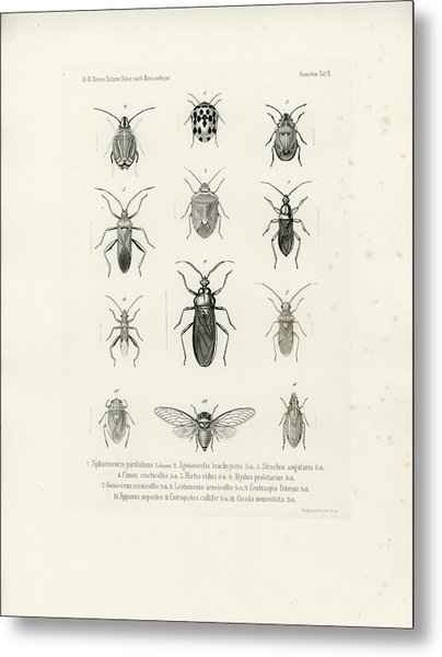 African Bugs And Insects Metal Print