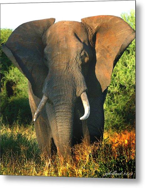 African Bull Elephant Metal Print