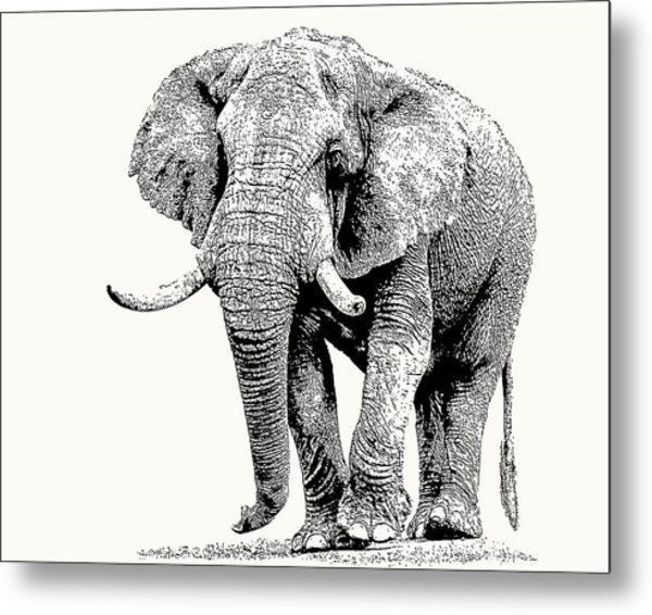 African Bull Elephant With Fine Tusks Metal Print