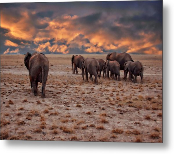 African Elephants Metal Print