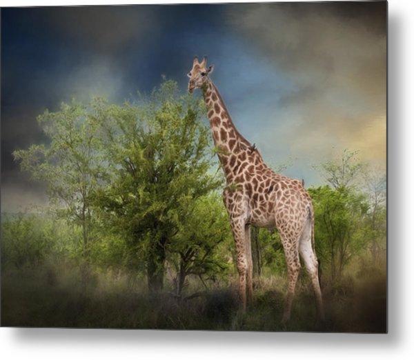 African Giraffe Metal Print