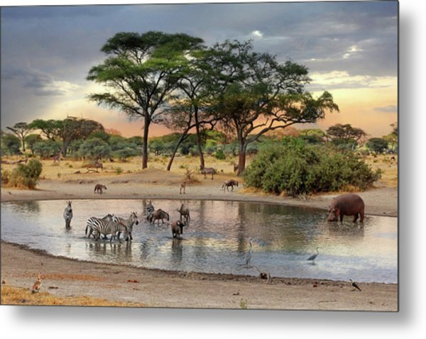African Safari Wildlife At The Waterhole Metal Print