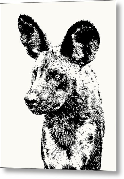 African Wild Dog On Alert Metal Print