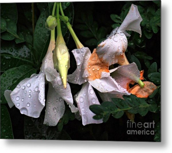 After The Rain - Flower Photography Metal Print