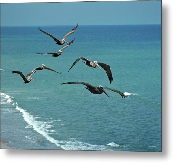 Afternoon Flight Metal Print by Frank Mari