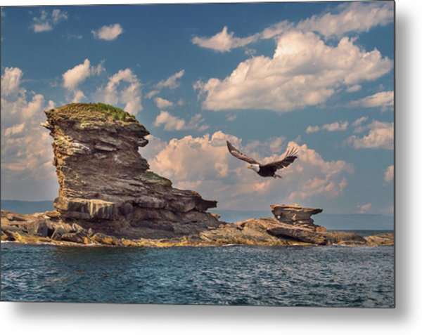 Afternoon Flight Metal Print by Tracy Munson