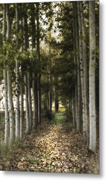 Afternoon Stroll Metal Print