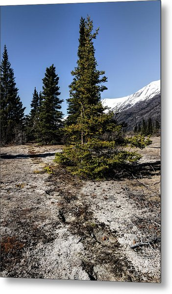 Metal Print featuring the photograph Age-old Bear Trail by Fred Denner