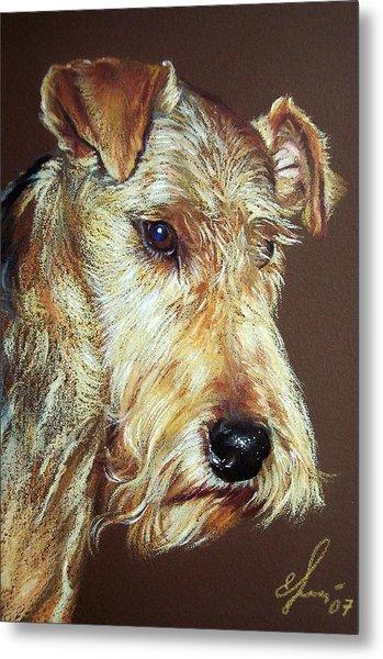 Airdale Terrier Metal Print