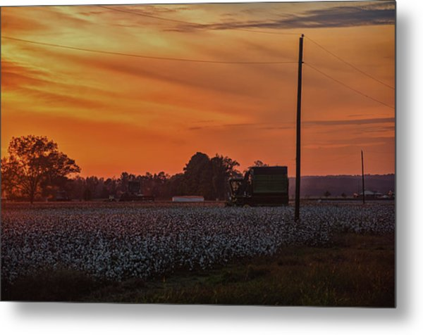 Alabama Cotton Fields Metal Print