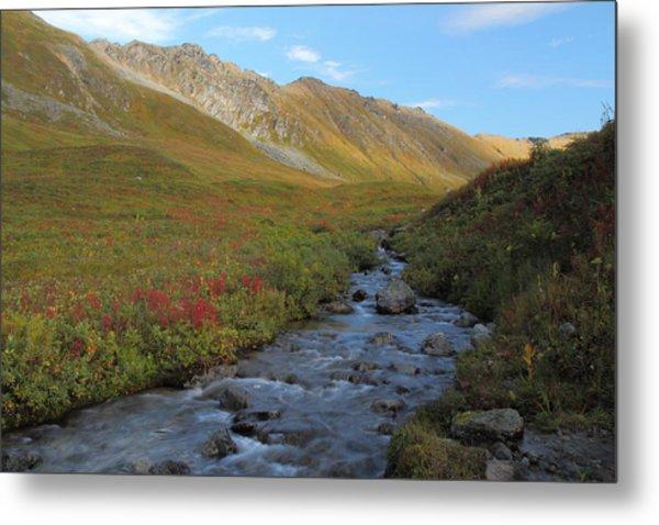 Alaska Fireweed And Willow Creek Along Hatcher Pass Road Metal Print