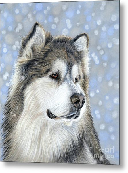 Metal Print featuring the mixed media Alaskan Malamute by Donna Mulley