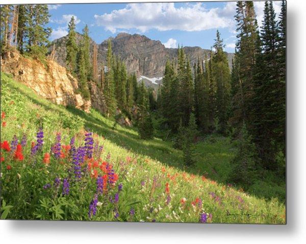 Albion Basin Wasatch Mountains Utah Metal Print