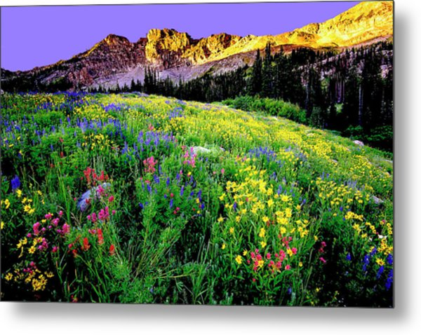 Albion Meadows Metal Print