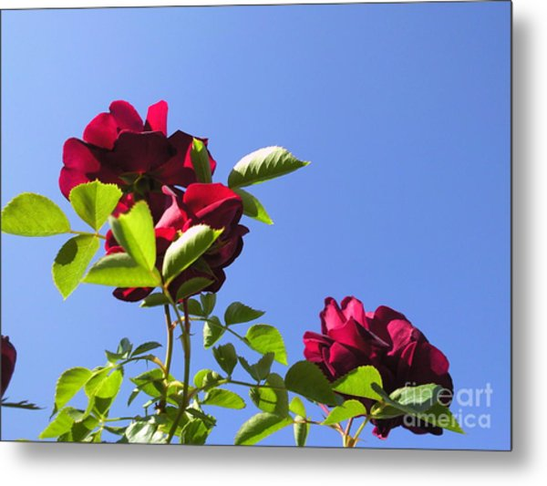 All About Roses And Blue Skies V Metal Print by Daniel Henning