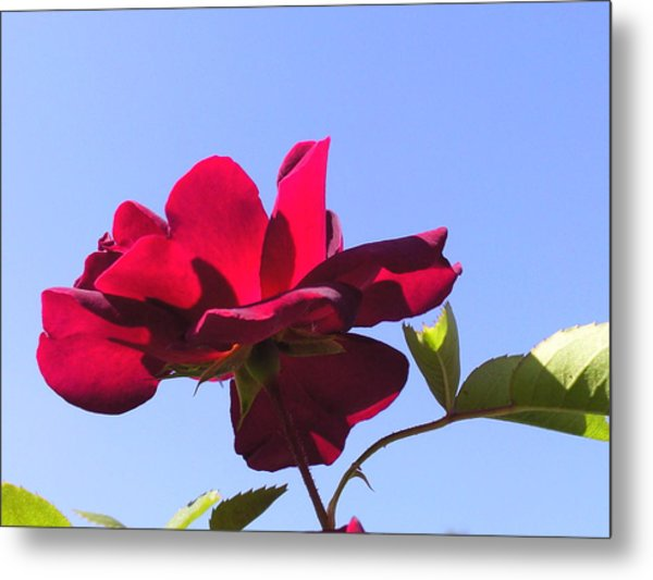 All About Roses And Blue Skies Viii Metal Print by Daniel Henning