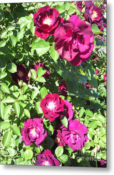 All About Roses And Green Leaves II Metal Print by Daniel Henning