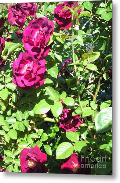 All About Roses And Green Leaves IIi Metal Print by Daniel Henning
