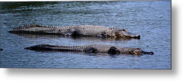 Alligator Pair Metal Print