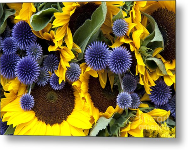 Allium And Sunflowers Metal Print