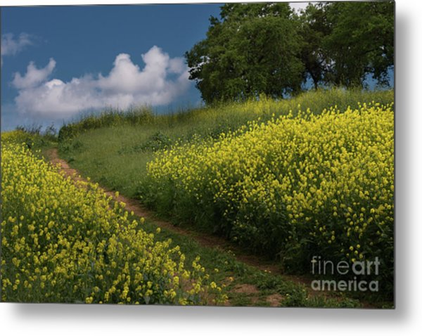 Almaden Meadows' Mustard Blossoms Metal Print