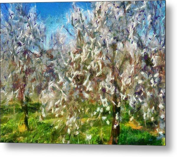 Almond Orchard Blossom Metal Print