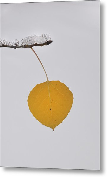Alone In The Snow Metal Print