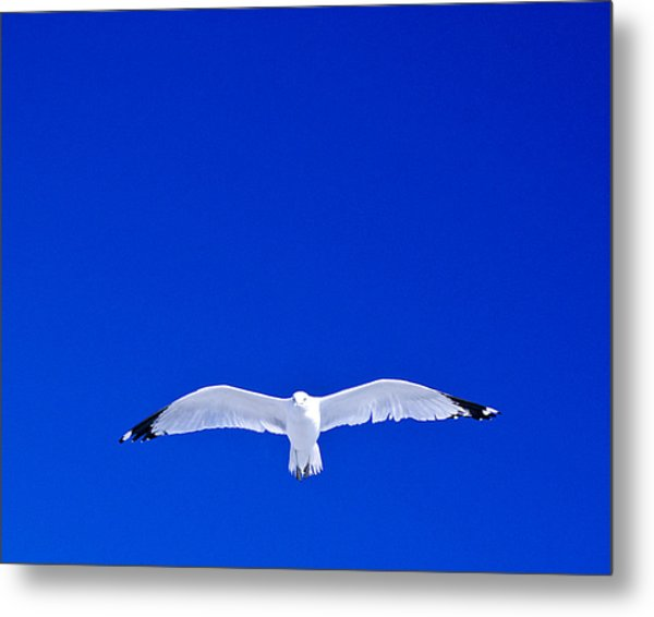 Alone Metal Print by William Bray
