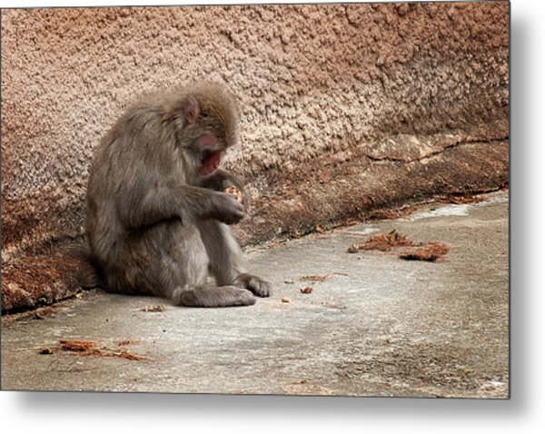 Alone With My Bread Crumbs Metal Print