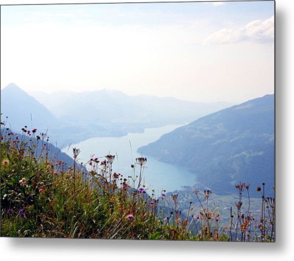 Alpine Flora On Top Of Schynige Platte Metal Print