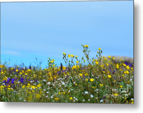 Metal Print featuring the photograph Alpine Wildflowers by Kate Avery