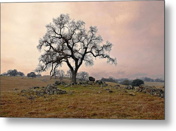 Amador Oak Metal Print by M Ryan