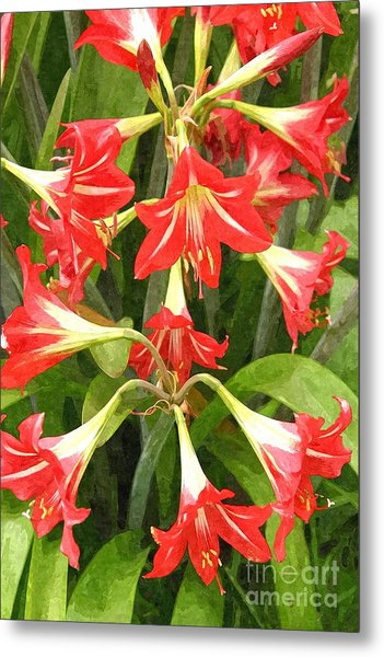 Amaryllis Lily Bunch Metal Print