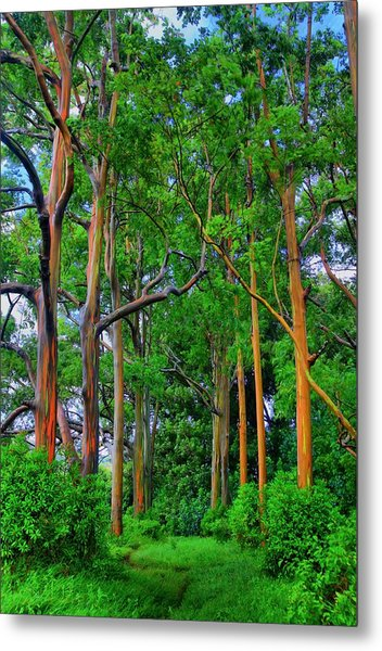 Amazing Rainbow Eucalyptus Metal Print